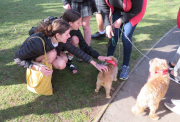 Getting our cuddles in with the Canine Friends!